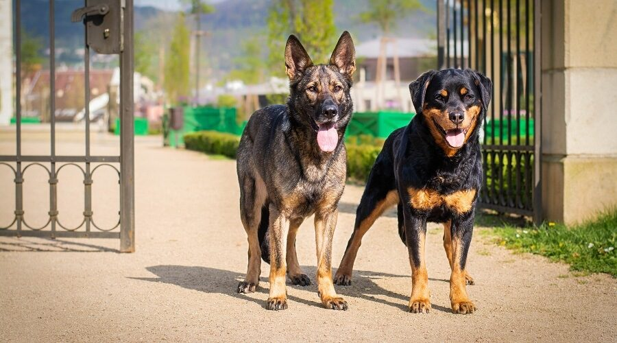 search-&-detection-dogs-london