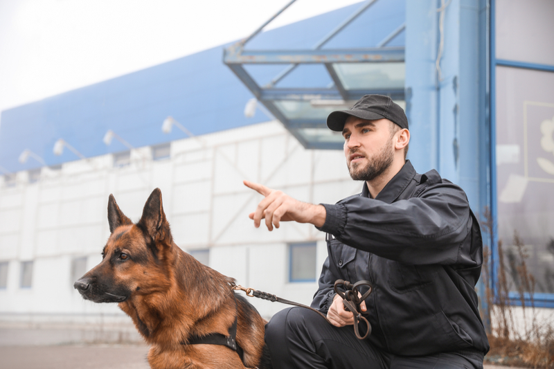 security dog and security guard